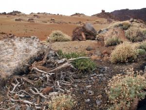 Vulkanlandschaft auf Teneriffa
