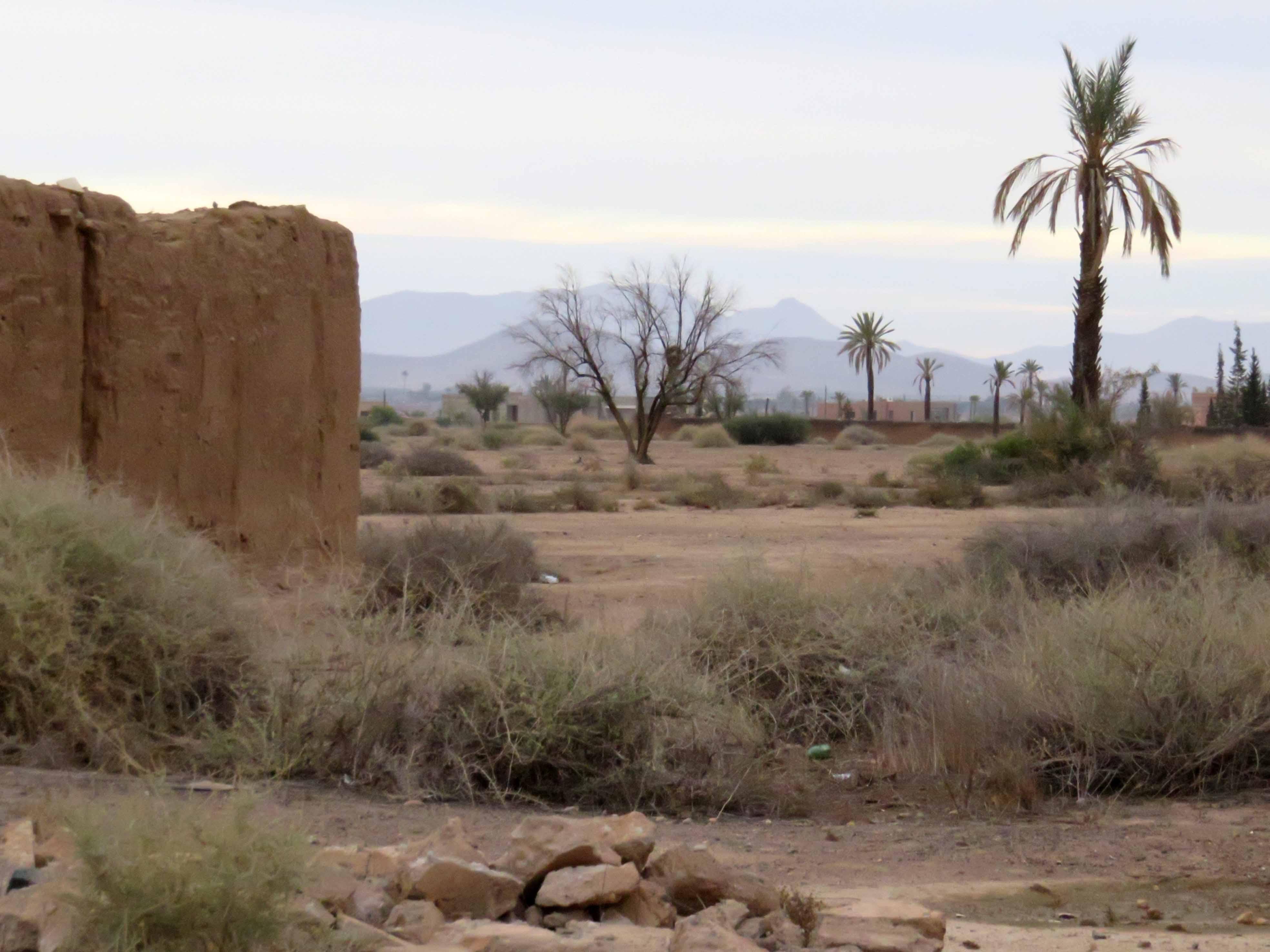palmen-am-rande-einer-oase